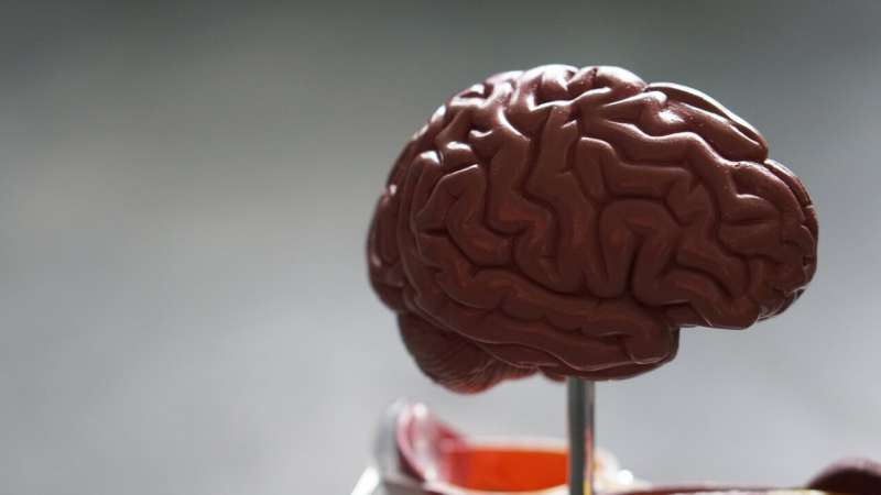 Researcher finds new strategy for fighting brain cancer